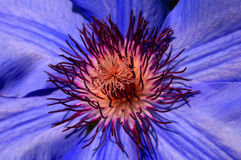 Macro del fiore Fotografie Stock
