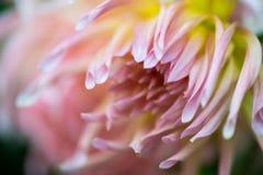 Macro del fiore Fotografia Stock