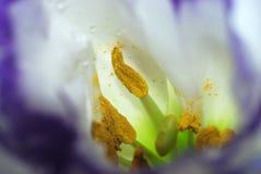 Macro del fiore bianco Fotografia Stock Libera da Diritti