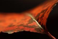 macro del foglio di autunno Fotografia Stock Libera da Diritti