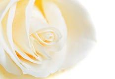Macro del germoglio della rosa di bianco Fotografia Stock