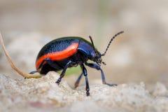 Macro del insecto Imágenes de archivo libres de regalías