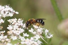 Macro del insecto fotografía de archivo