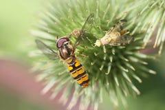 Macro del insecto fotos de archivo