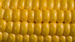 Macro del maíz Imagen de archivo libre de regalías