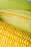 Macro del maíz fresco Fotografía de archivo libre de regalías