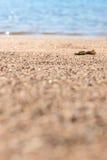 Macro del mare della sabbia Fotografie Stock Libere da Diritti