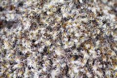 Macro del nord di estate polare del muschio Fotografia Stock