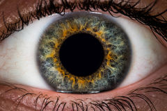 Macro del ojo fotografía de archivo libre de regalías