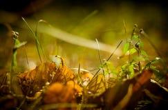 Macro del otoño Foto de archivo libre de regalías