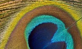 Macro del pavo real Fotografía de archivo libre de regalías