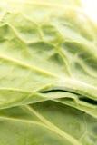 Macro del primo piano delle foglie fresche del cavolo verde Immagini Stock