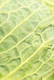 Macro del primo piano delle foglie fresche del cavolo verde Fotografie Stock Libere da Diritti