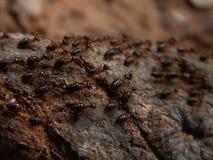 Macro del rastro de la termita Imagen de archivo libre de regalías