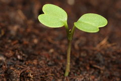 Macro del semenzale Fotografia Stock