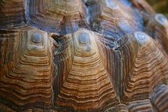 Macro del shell de la tortuga imagen de archivo libre de regalías