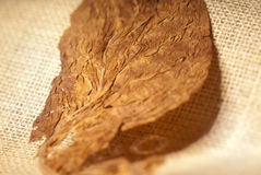 Macro del tabaco Fotografía de archivo libre de regalías