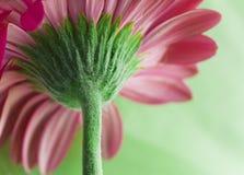 Macro del vástago de la flor imagenes de archivo
