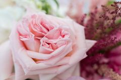 Macro delicate fresh pink rose flower. Wedding fresh flowers decoration.  royalty free stock photos