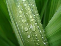 Macro dell'acqua sul foglio verde 2 Immagini Stock