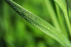 Macro dell'erba Fotografia Stock Libera da Diritti