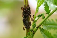 Macro dell'insetto Fotografia Stock Libera da Diritti