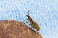 Macro dell'insetto su priorità bassa blu Fotografie Stock