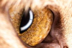 Macro dell'occhio dell'animale Immagine Stock