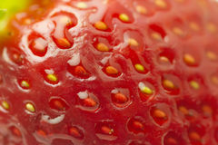Macro fragola organica Fotografie Stock Libere da Diritti