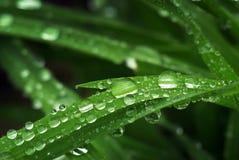 Macro della goccia di pioggia Fotografia Stock Libera da Diritti