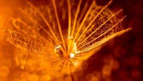 Macro della lanugine in arancia fotografia stock libera da diritti