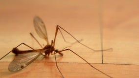Macro della libellula sul pavimento stock footage