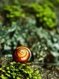 Macro della lumaca nell'ambiente naturale Fotografie Stock Libere da Diritti