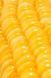 Macro della pannocchia di granturco Fotografia Stock
