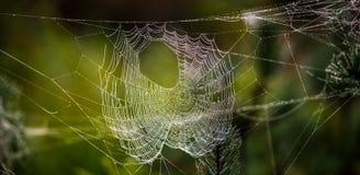 Macro della ragnatela Fotografia Stock Libera da Diritti