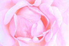 Macro della Rosa Fotografia Stock Libera da Diritti