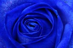 Macro della rosa del blu Fotografia Stock Libera da Diritti