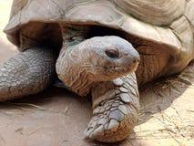 Macro della tartaruga in natura Fotografia Stock