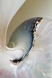 Macro delle coperture del Nautilus fotografia stock libera da diritti