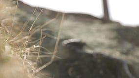 Macro delle foglie e dei ramoscelli per il minimalista sui precedenti archivi video
