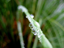 Macro delle gocce dell'acqua sui fogli Fotografia Stock Libera da Diritti