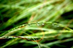 Macro delle gocce dell'acqua sui fogli Fotografie Stock Libere da Diritti