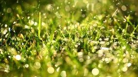 Macro delle gocce di acqua che cadono sull'erba Fotografie Stock Libere da Diritti