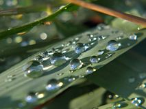 Macro delle lame di erba con le gocce di acqua immagini stock libere da diritti