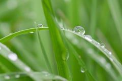 Macro des baisses de l'eau sur l'herbe Photos stock