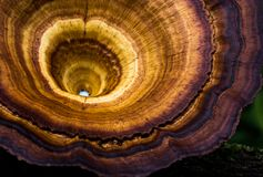 Macro des champignons avec des textures uniques images libres de droits