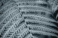 Macro des feuilles de fougère en noir et blanc Images libres de droits