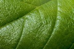 Macro des feuilles vertes photos stock