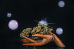 Cannabis nugs and dragonfly isolated over black with smoke and b Royalty Free Stock Images
