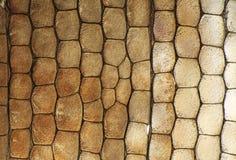 Macro, detail of lizard skin gecko, Phelsuma madagascariensis. Under stereo microscope Stock Image